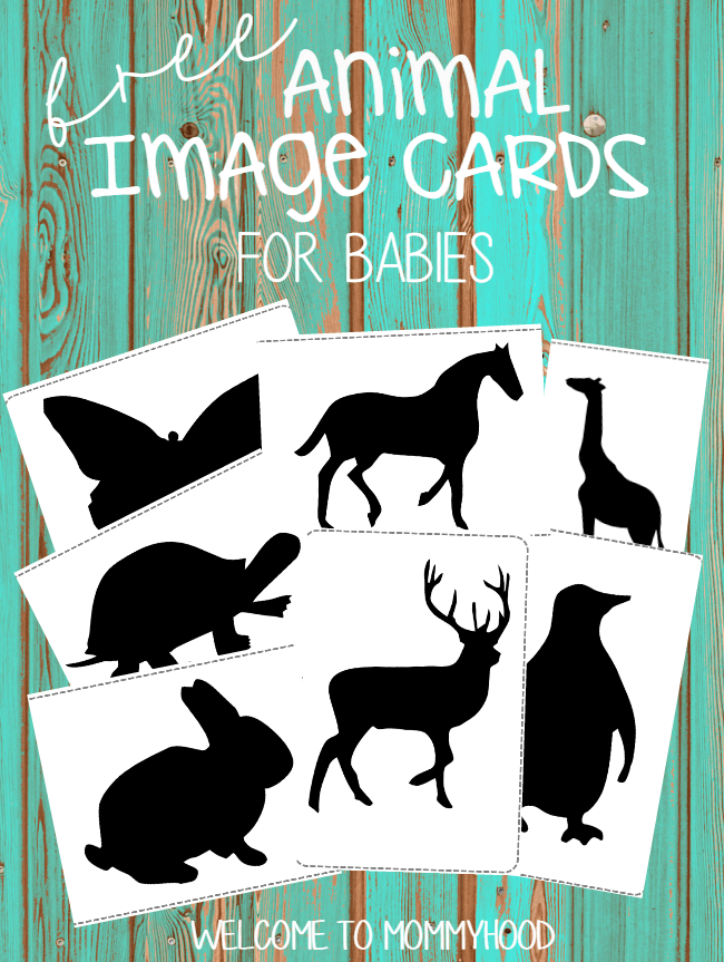 Montessori activities for babies black and white animal cards for Wildlife christmas cards 2016