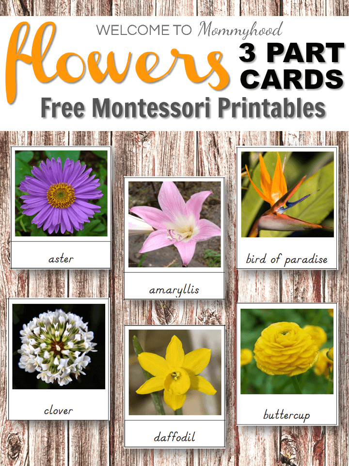 Montessori Flowers 3 Part Cards - teach children about different types of flowers with these beautiful cards. They will be so interested in learning about all of the different beautiful flowers that exist!