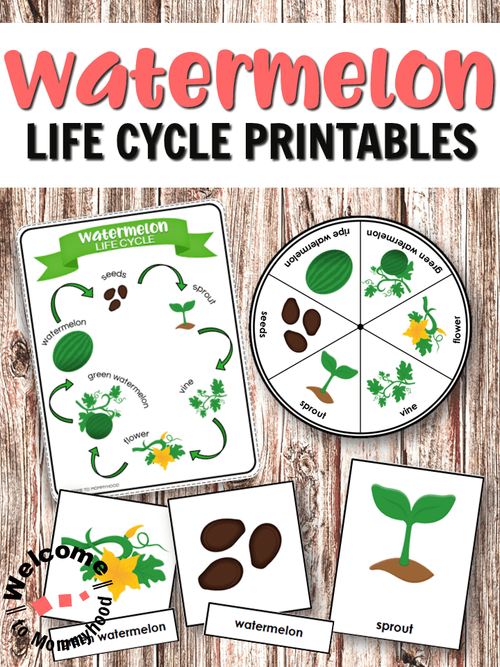 watermelon life cycle printables for hands
